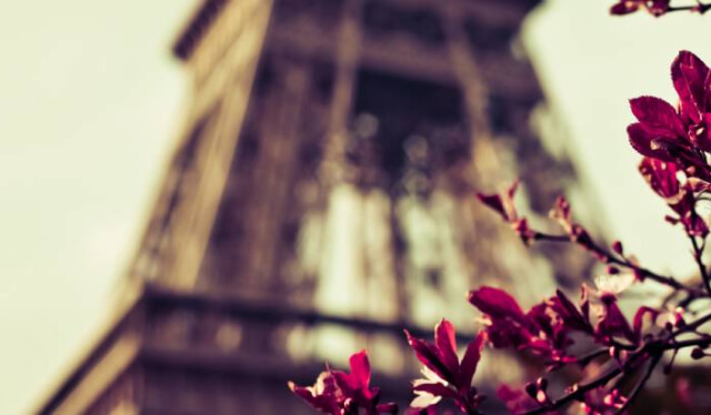 Blurry background of the Eiffel Tower with a red flower in focus in front of it