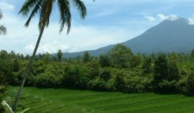 Bali, Indonesia landscape with palm tree, rice fields, and volcano