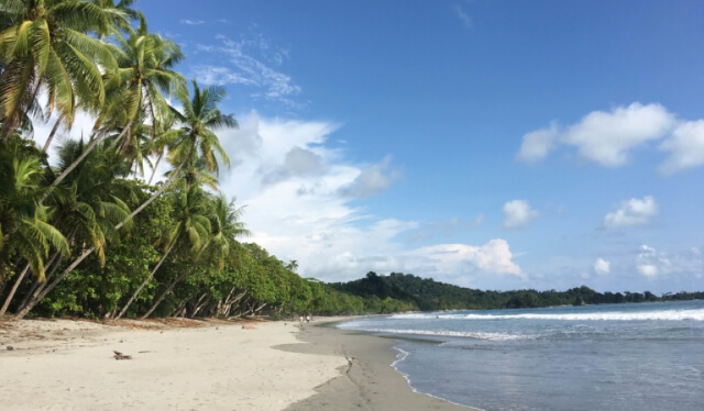 Beautiful Costa Rican beach with palm trees and blue skies