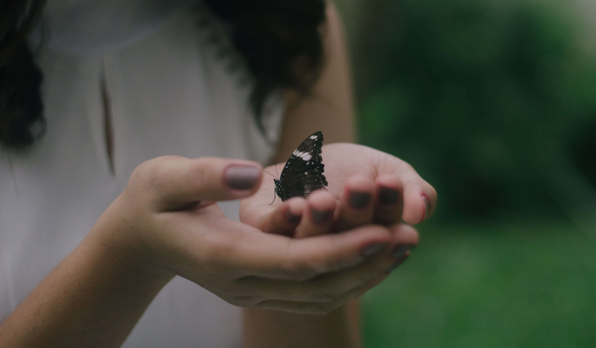 Close-up of a woman's hands holding a black and white butterfly