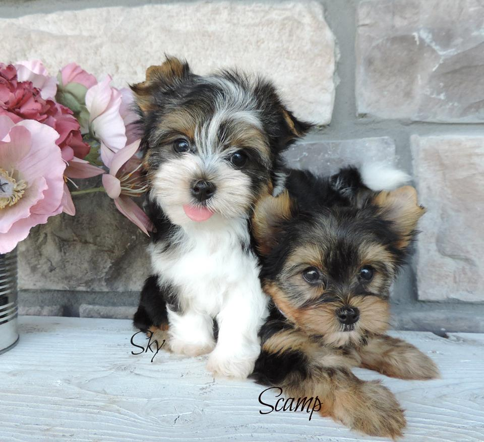 Contented Puppies Paradise Home