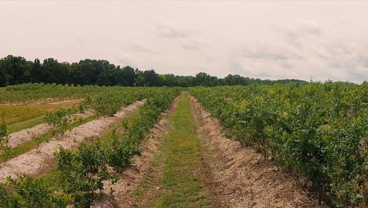 Persimmon Hill Farm Video