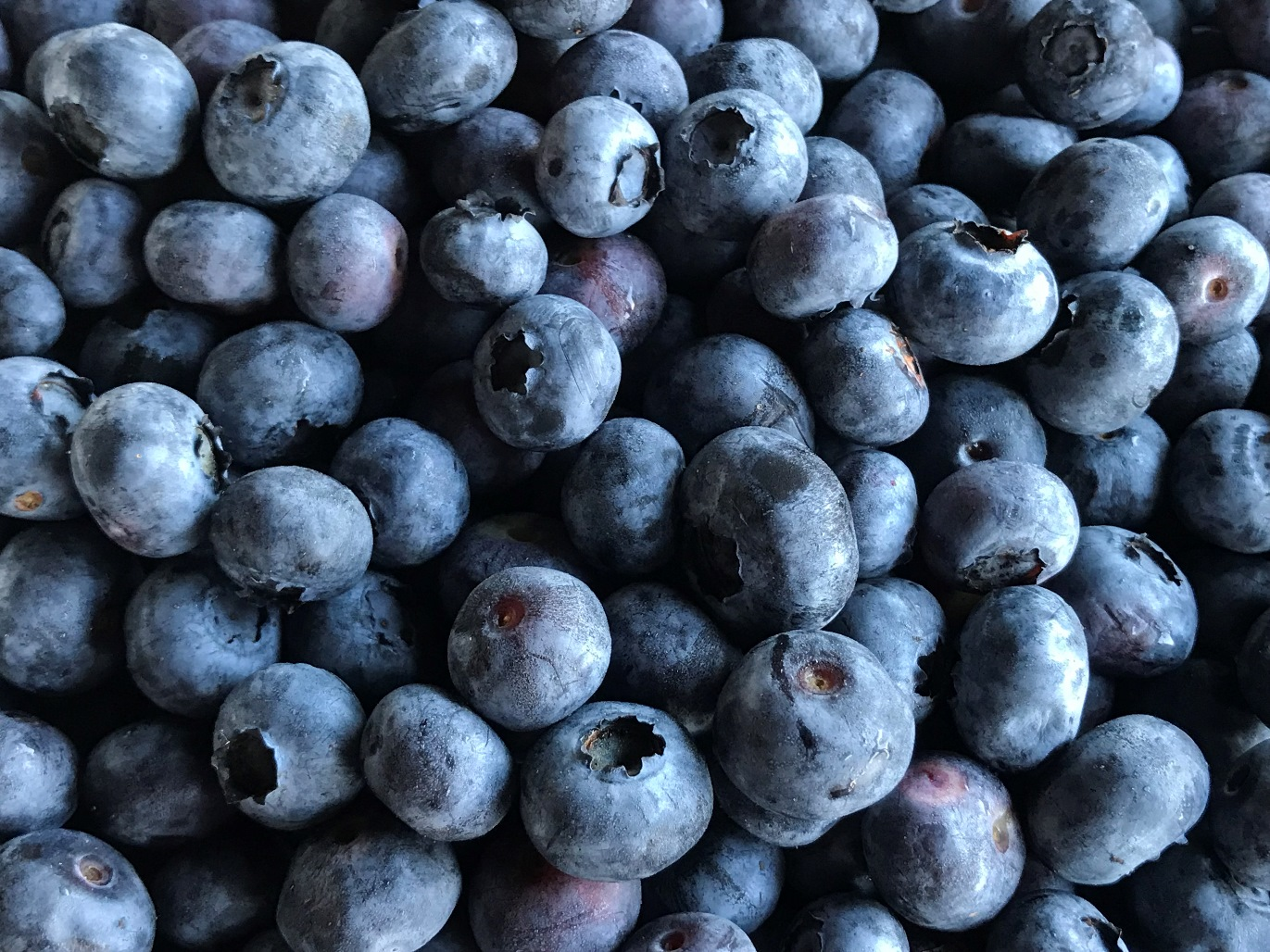We Also Have Great Frozen Blueberries Available The Price Is 4 65 Per Pound