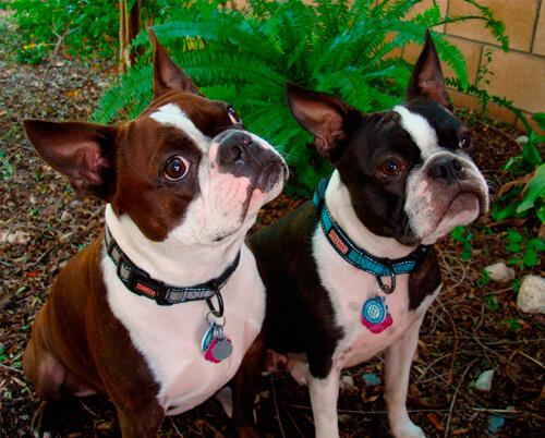 Dr. Tudor's Dogs