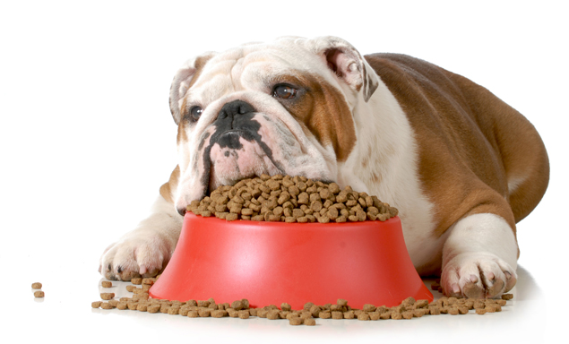 Dog food bowl, understanding dog food labels