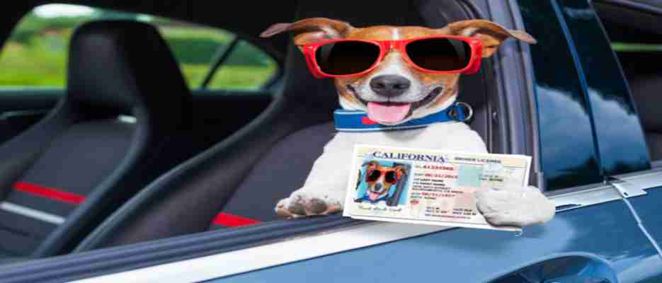 Save your California driver's license with a DUI law firm that can fight your case for you. Get the help you need at affordable rates.