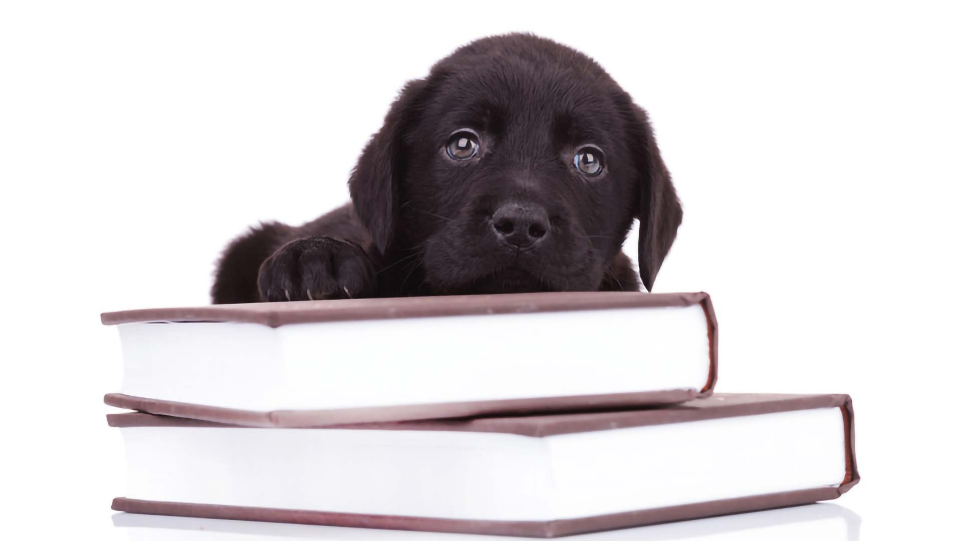 Dogs are the best, especially on National Dog Day, even when I am reading the law books at Tina Barberi's law firm