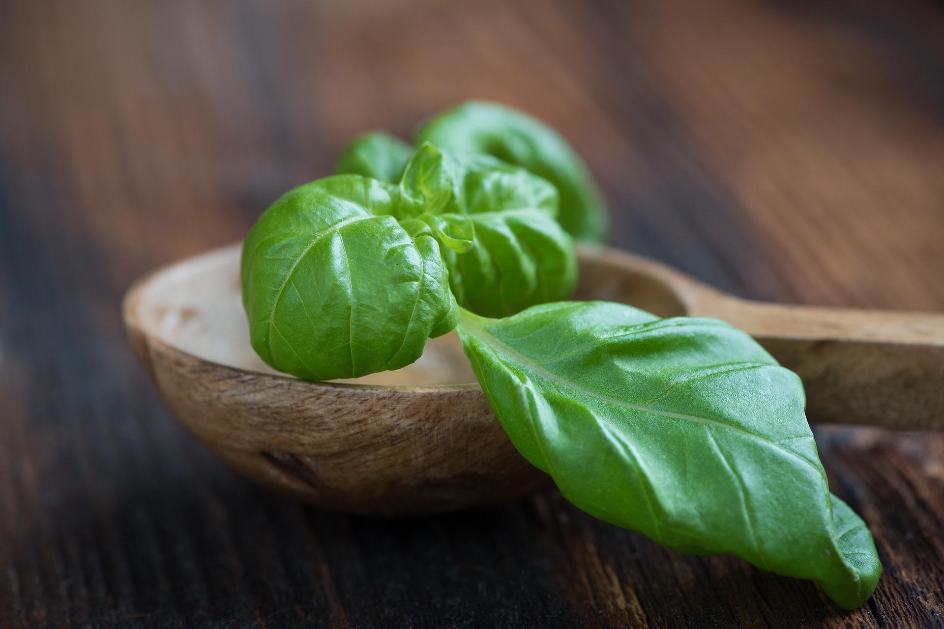 Urban farming spotlight: How to grow tasty organic basil