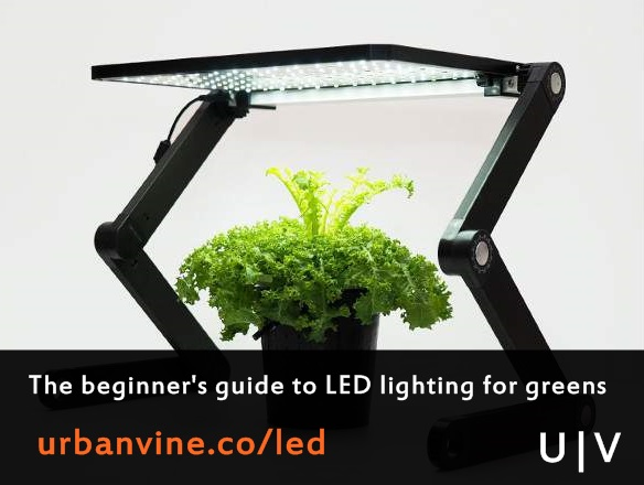 LED Grow Lights For Plants: An Easy Guide