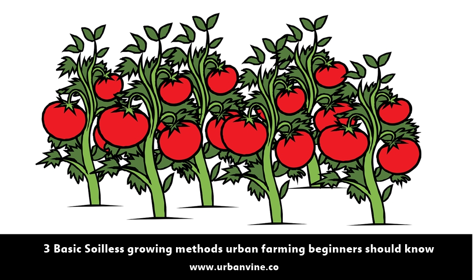 3 Basic Soilless Growing methods for urban farming beginners