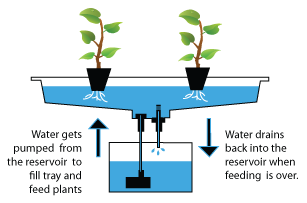 diagram: how hydroponics works