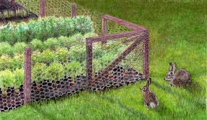 rabbits pests urban farming