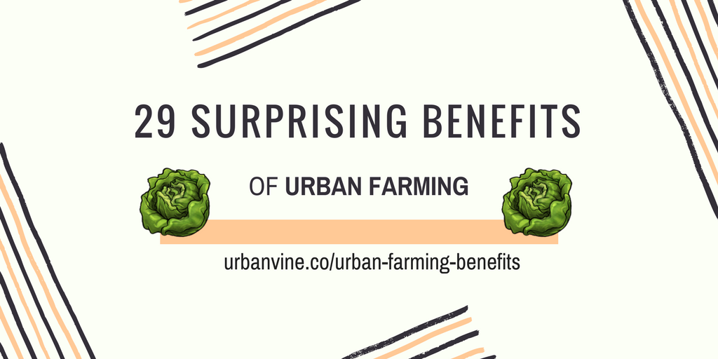 29 Surprising Benefits of Urban Farming