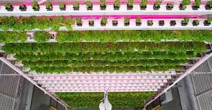 Vertical Farm Example