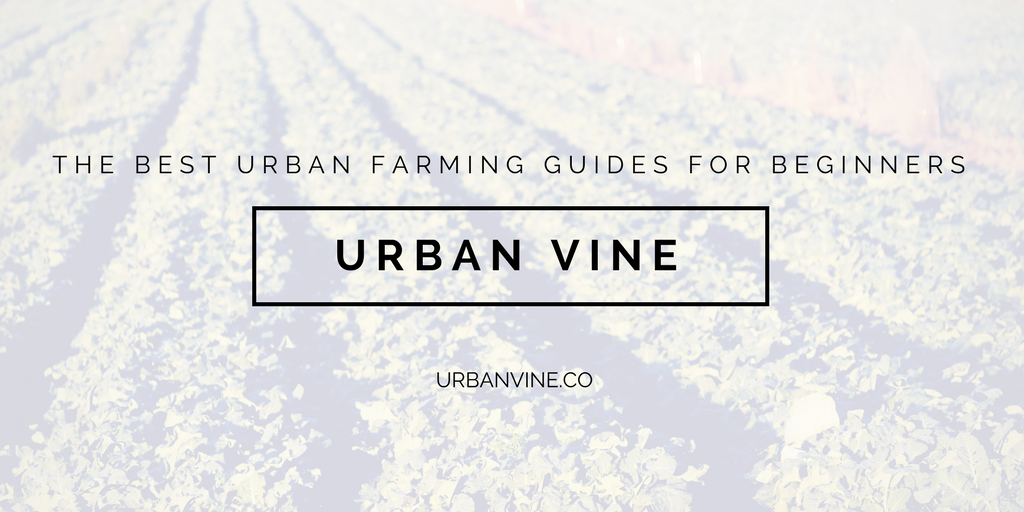 Urban Vine: The Best Urban Farming Guides For Beginners
