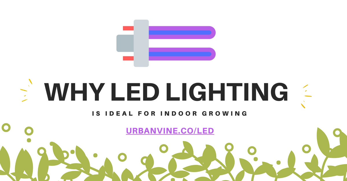 Why is LED lighting is ideal for indoor growing?