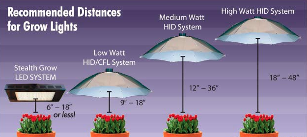 11 Simple Guidelines To Know Before Buying Grow Lights