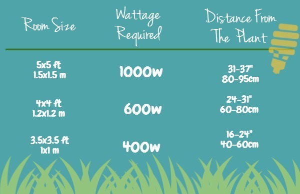 How Room Size Affects Wattage and Plant Distance