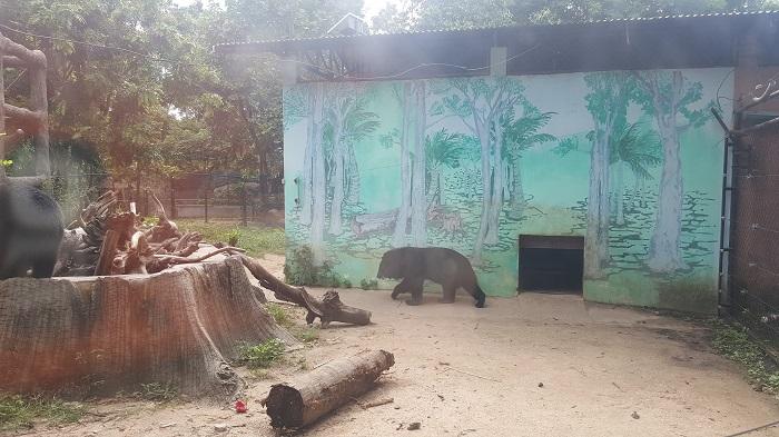Sunbears at Phnom Tamao Wildlife Rescue Center (Phnom Penh)