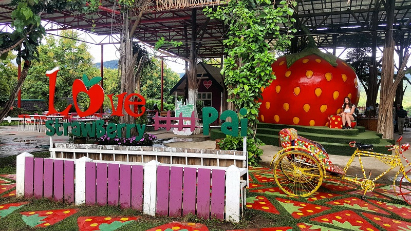 top things to do in Pai, the Strawberries