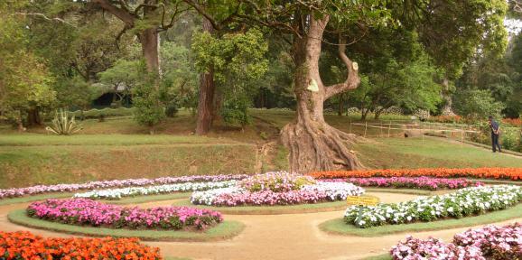 Nuwara Eliya flowers photos (Hakgala Botanical Gardens)