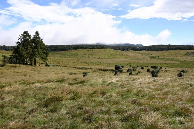 Horton Plains in Nuwara Eliya