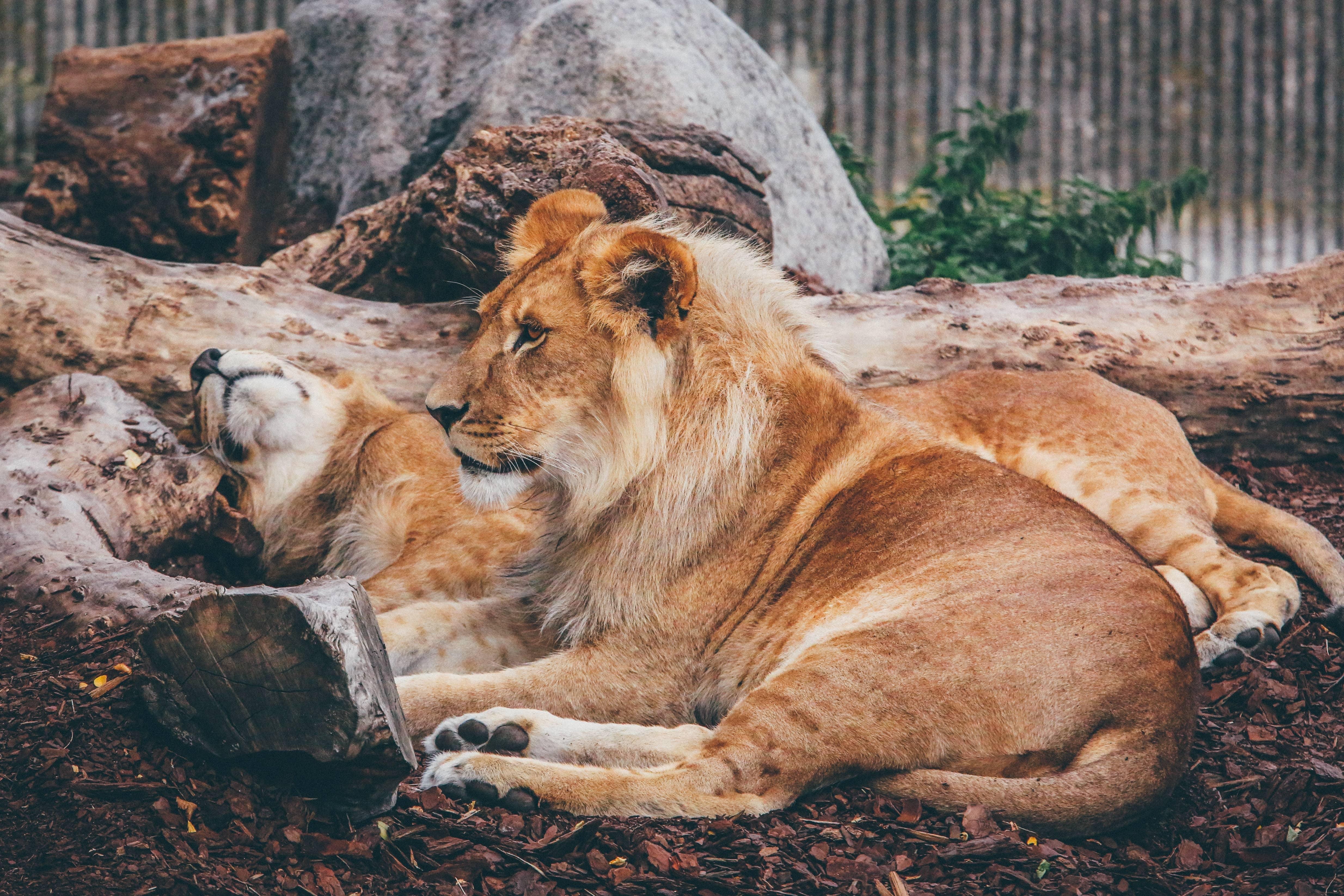 zoo in delhi