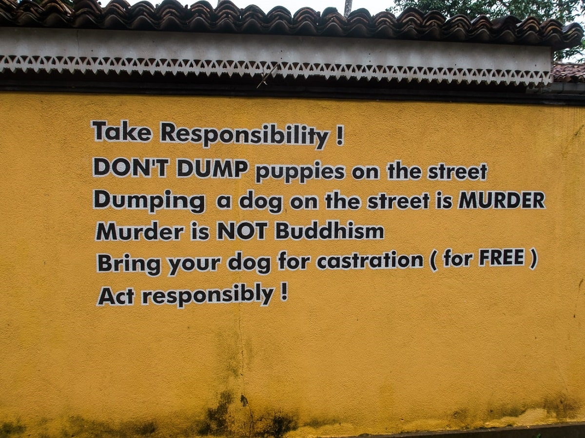 dog care clinic unawauna