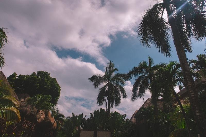 jungle vibes at magic blue boutique hotel