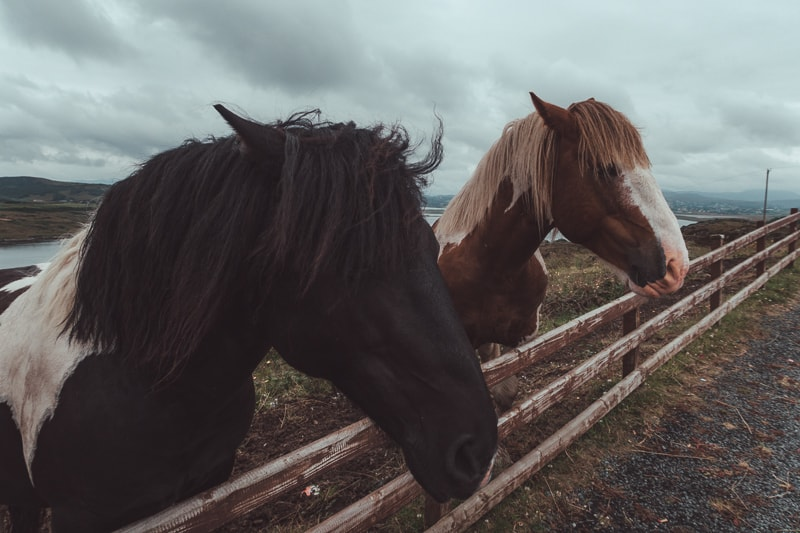 horses in donegal