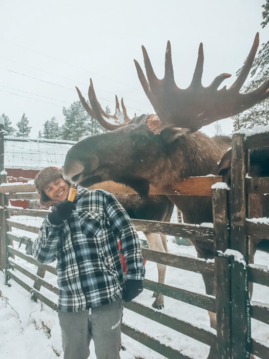 moose farm sweden