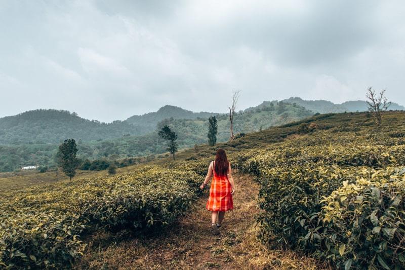 tea fields bandung