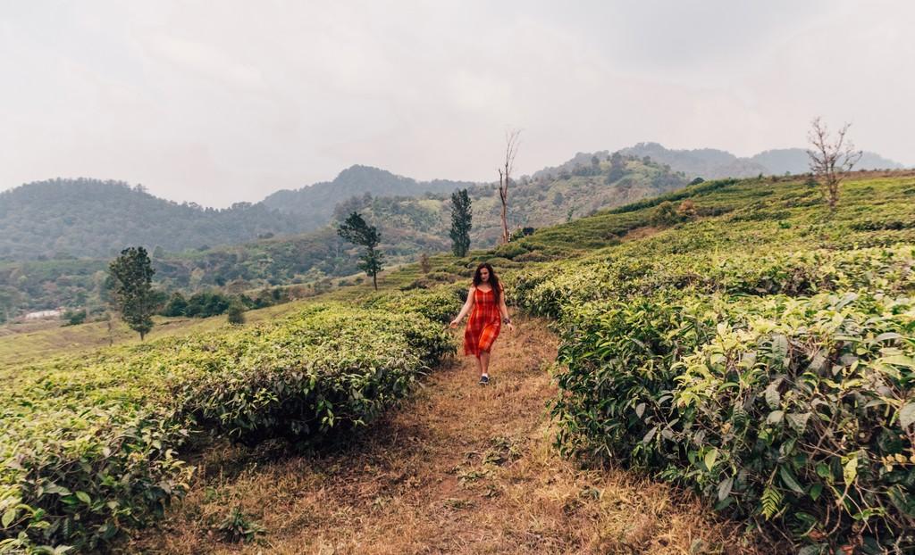 bandung tea fields