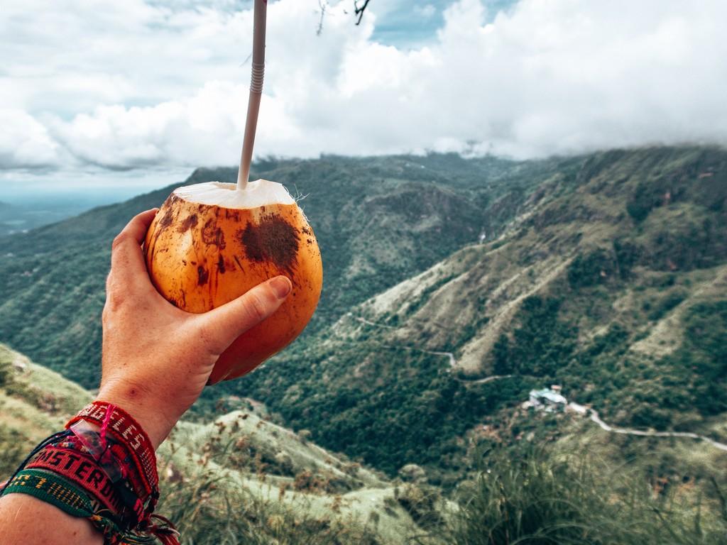coconuts at little adams peak