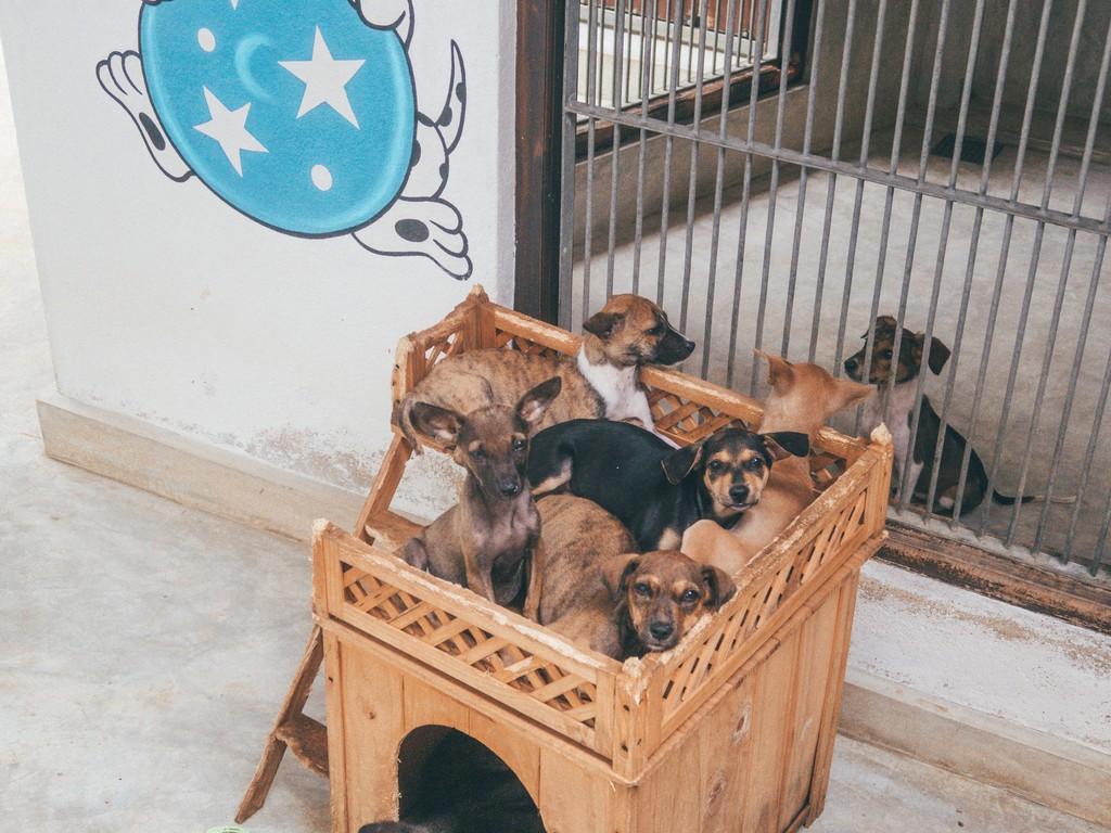 dog clinic in unawatuna