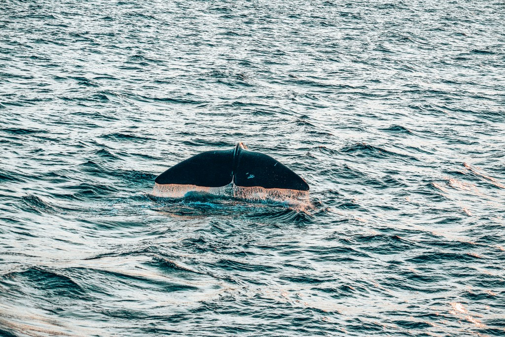 whale watching in unawatuna