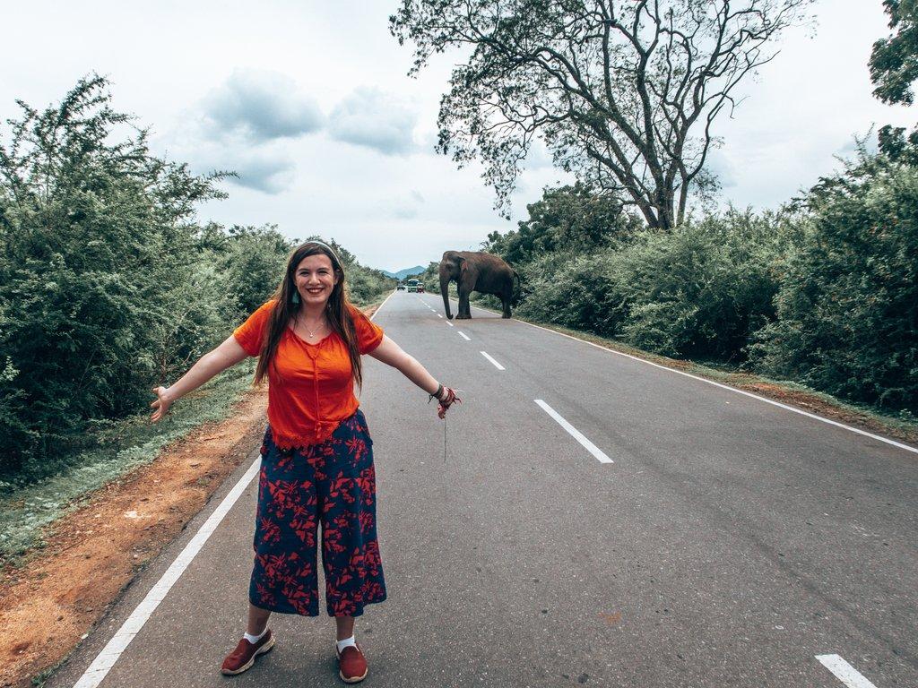 elephants on the road in sri lanka