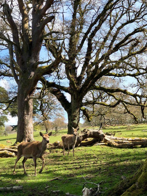 Deer Park, Scotland