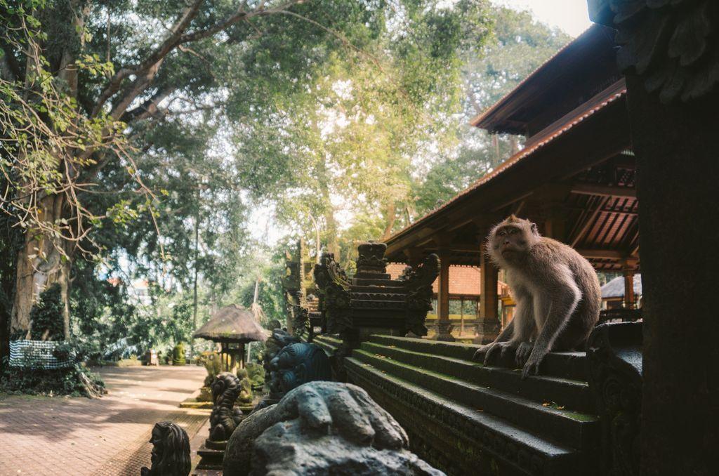 Ubud, Monkey Forest, Indonesia