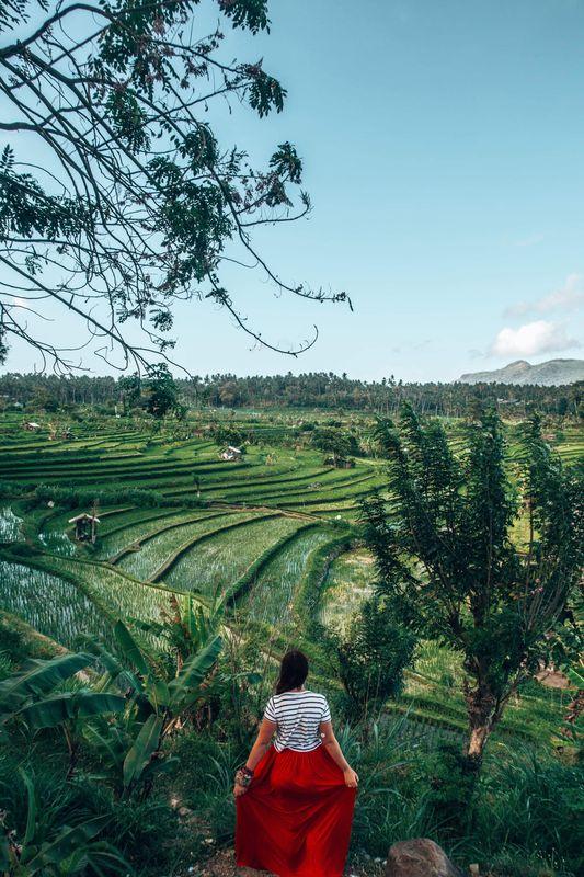 Rice Fields, Indonesia