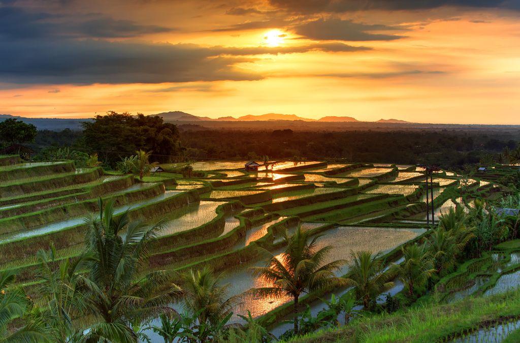 Jatiluwih Rice terraces on Bali during sunrise, Indonesia