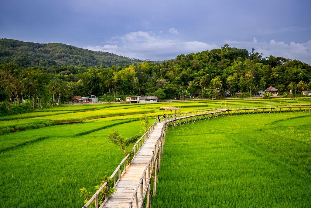 Sukorame Rice Field