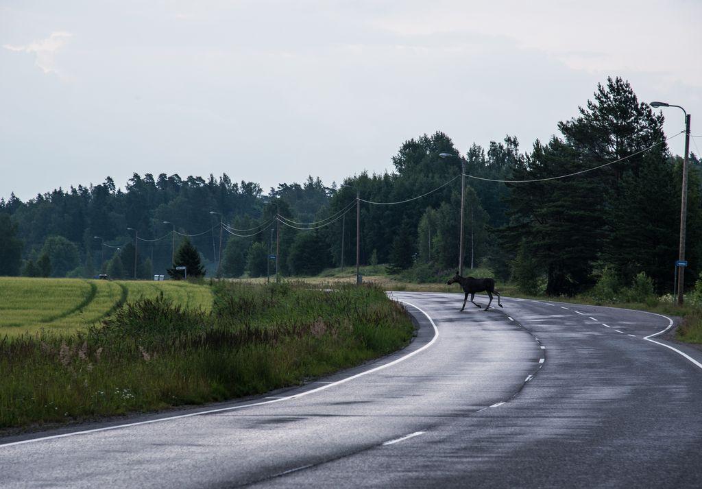 Moose, Finland