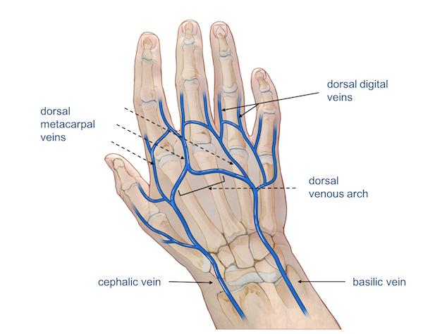 Wrist Hand Anatomy