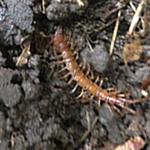 Rhode Island Centipede Exterminating