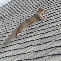 Squirrels Control in RI