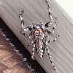 Rhode Island Spider Exterminating