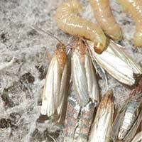 RI Food Worms Rhode Island