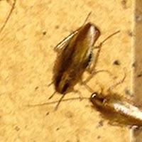 RI Cockroach Control