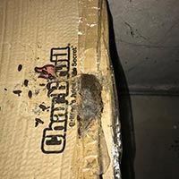 Dead Rodent Cleaning in Rhode island